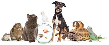 Could a Pet Help?: The Therapeutic Value of Animals